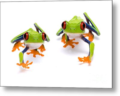 Red-eyed Treefrogs Walking Metal Print by Mark Bowler and Photo Researchers