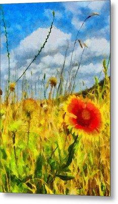Red Flower In The Field Metal Print by Jeff Kolker