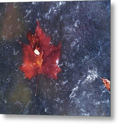 Red Leaf In Ice Metal Print by Todd Sherlock