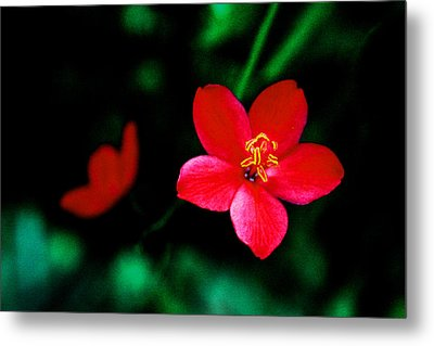 Red Petaled Dream Metal Print by Jennifer Bright