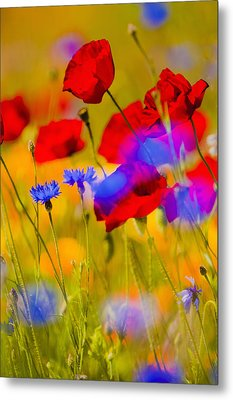 Red Poppies And Wildflowers In A Field, Soft Focus Metal Print by Bob Pool