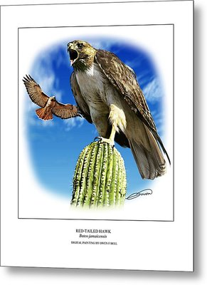 Red Tailed Hawk Metal Print by Owen Bell