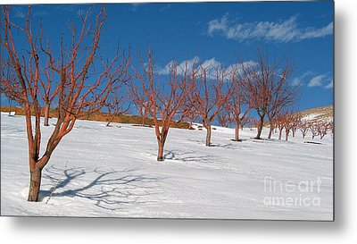 Red Trees Metal Print by Issam Hajjar