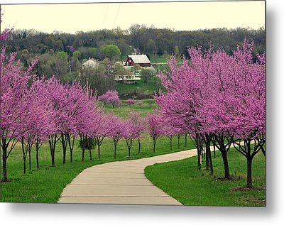 Redbud Metal Print by Marty Koch