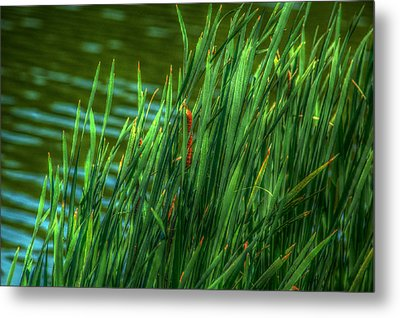 Reed Amoung Grass Metal Print by Ronald T Williams