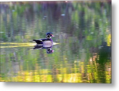 Reflection Metal Print by Bo Chambers