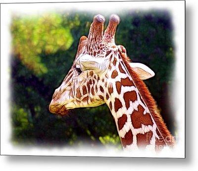 Reticulated Giraffe Metal Print by Judi Bagwell