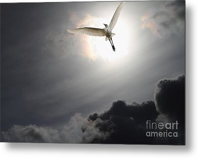 Return To Eternity Metal Print by Wingsdomain Art and Photography
