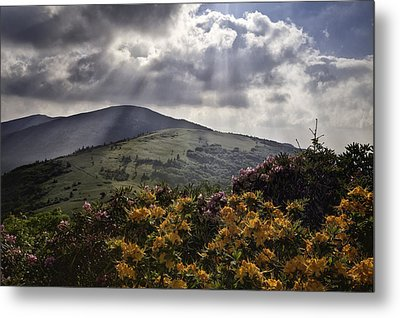 Roan Mountain Afternoon Metal Print by Rob Travis