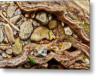 Rocks And Roots Metal Print by Christopher Holmes
