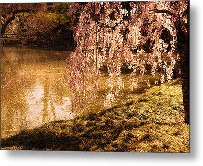 Romance - Sunlight Through Cherry Blossoms Metal Print by Vivienne Gucwa