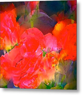 Rose 144 Metal Print by Pamela Cooper