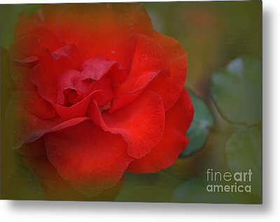 Rose Dream Metal Print by Mary Machare