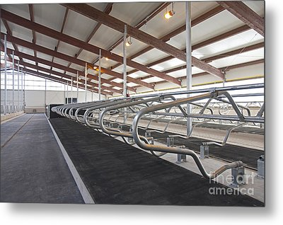 Row Of Cattle Cubicles Metal Print by Jaak Nilson