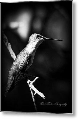 Ruby-throated Hummingbird - Signature Metal Print by Travis Truelove