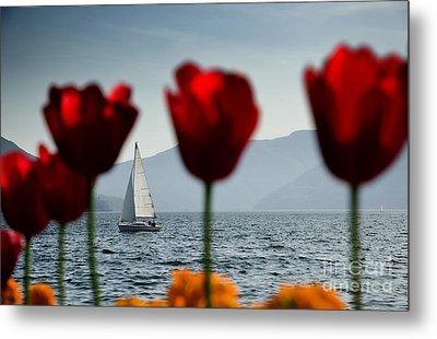 Sailing Boat And Tulip Metal Print by Mats Silvan