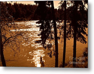 Salmon Is Running 2 Metal Print by Tanya  Searcy