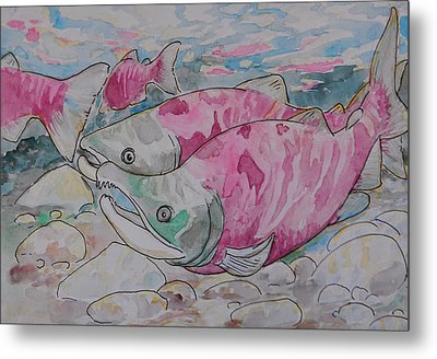 Salmon Spawn Metal Print by Jenn Cunningham