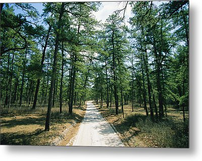 Sand Road Through The Pine Barrens, New Metal Print by Skip Brown