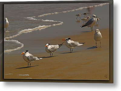 Sand And Sea Birds Metal Print by Barbara Middleton