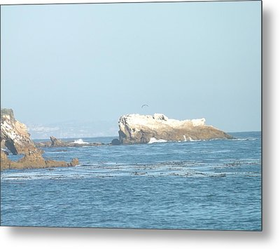 Sea Life Metal Print by Jamie Diamond