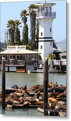 Sea Lions At Pier 39 San Francisco California . 7d14296 Metal Print by Wingsdomain Art and Photography