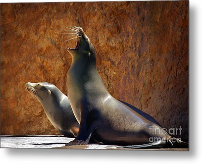 Sea Lions Metal Print by Carlos Caetano