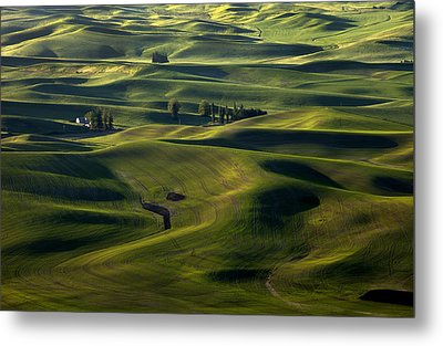 Sea Of Green Metal Print by Mike  Dawson