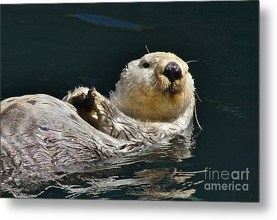 Sea Otter Metal Print by Sean Griffin