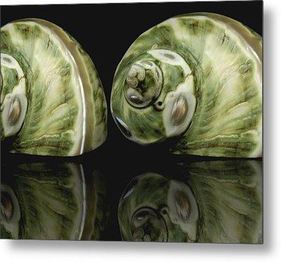 Sea Shells Photography Still Life Metal Print by Ann Powell