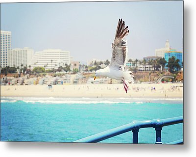 Seagull Flying Metal Print by Libertad Leal Photography