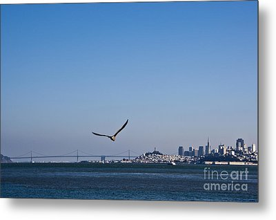 Seagull Flying Over San Francisco Bay Metal Print by David Buffington