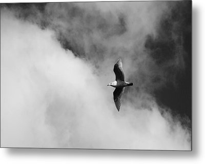 Seagull In The Clouds Metal Print by Twenty Two North Photography