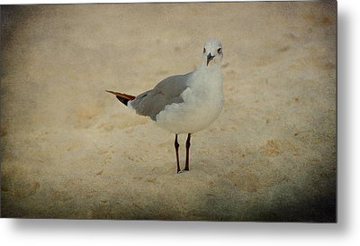 Gull Metal Print by Sandy Keeton