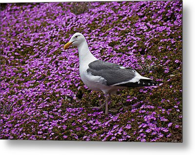 Seagull Standing Among Flowers Metal Print by Garry Gay