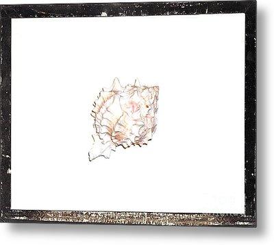 Seashell  C Metal Print by Marsha Heiken