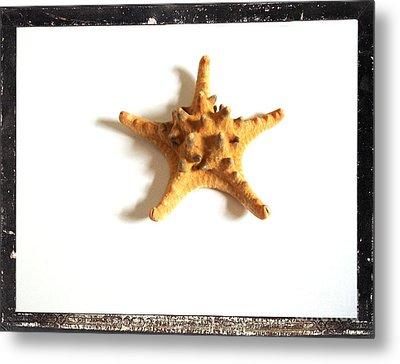 Seashells B Metal Print by Marsha Heiken