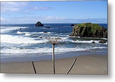 Seaside Solitude Metal Print by Will Borden