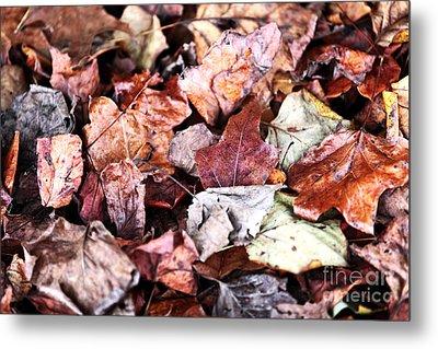 Seasons Change Metal Print by John Rizzuto