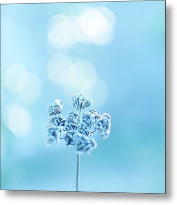 September Frost Metal Print by Alexandre Fundone