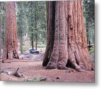 Sequoia  Trees 2 Metal Print by Naxart Studio