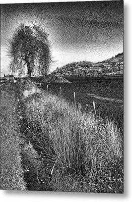 Shaggy Tree Metal Print by Bonnie Bruno