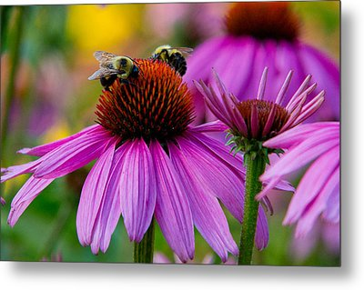 Sharing Metal Print by Frank Pietlock