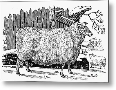 Sheep, 1788 Metal Print by Granger