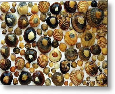 Shell Background Metal Print by Carlos Caetano