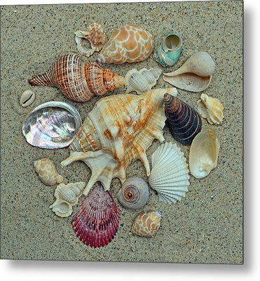 Shell Collection 2 Metal Print by Sandi OReilly