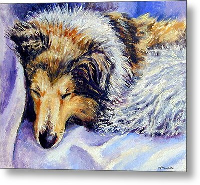 Sheltie Napster Metal Print by Lyn Cook