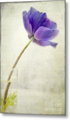 Shy Anemone Metal Print by Marion Galt