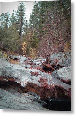 Sierra Nevada Forest 1 Metal Print by Naxart Studio