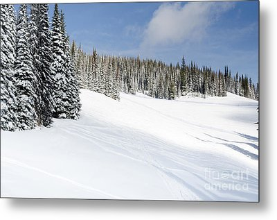 Silverstar Meadow Snow Covered Alpine Meadow Silver Star Metal Print by Andy Smy